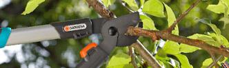 Baum- und Strauchpflege